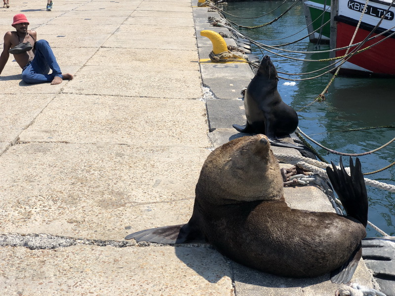 10 Grüde in Bildern wiso sich ein Besuch an deer Kalk Bay lohnt